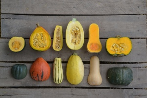 WinterSquash copy